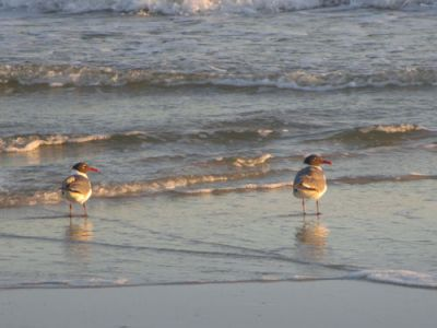 birds  on the shore image